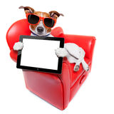 Hundesofa Lizenzfreie Stockfotos