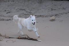 Hundespaß auf der Küste stockbilder