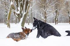 Hundespiel mit einander lizenzfreie stockbilder