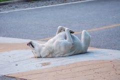 Hundespiel tot auf der Straße Stockfotografie