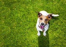 Hundespiele mit dem Eigentümer, der oben schaut lizenzfreie stockbilder