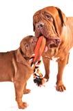 Hundespielen Stockbilder