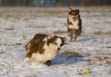 Hundespielen Lizenzfreie Stockfotos