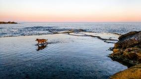 Hundespielen, laufend auf der Küste Stockbild