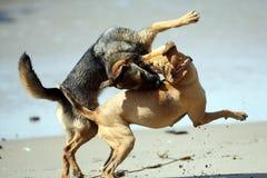 Hundespielen rau Lizenzfreies Stockbild