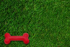 Hundespielzeug auf Rasen des grünen Grases Lizenzfreie Stockfotos
