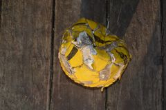 Hundespielzeugball lizenzfreies stockfoto