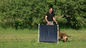 Hundespringende Übung stock video footage
