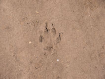 Hundespur auf dem Boden Stockfotografie
