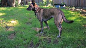 Hundestandschutz über Knochen stock video footage