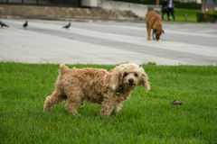 Hundestellung lizenzfreie stockfotografie
