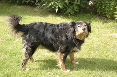 Hundestellung Stockfoto