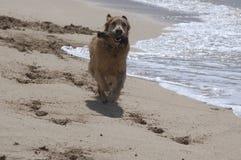 Hundetage am Strand stockbilder