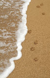 Hundetatze-Abdrücke im Sand Stockbild