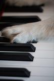 Hundetatzen auf dem Klavier Stockfotos