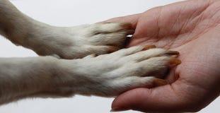 Hundetatzen und menschliche Hände Lizenzfreie Stockfotografie