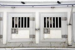 Hundeträger. Lizenzfreies Stockfoto