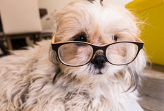 Hundetragende Gläser Stockbild