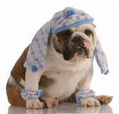 Hundetragender Hut und -schal lizenzfreie stockfotos