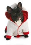Hundetragender Mantel Stockfoto