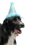 Hundetragender Partykegel Stockbild