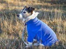 Hundetragender Pullover lizenzfreies stockbild