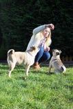 Hundetrainer tarining Pughunde Lizenzfreie Stockbilder
