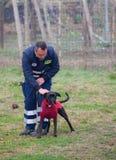Hundetraining Stockfotos