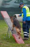 Hundetraining Stockfotografie