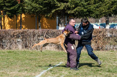 Hundetraining Stockfoto