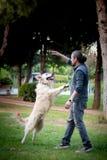 Hundetraining, Sprungs-Befehl, Gehorsam stockbilder
