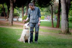 Hundetraining, Wartezeit-Befehl, Gehorsam stockbilder