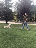 Hundetraining, Wartezeit-Befehl, Gehorsam lizenzfreie stockfotos