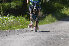 Hundetrekking Lizenzfreies Stockbild
