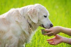 Hundetrinken Lizenzfreies Stockbild