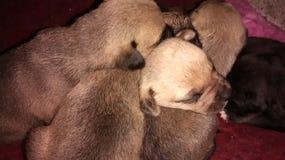 Hundeumarmung Stockfotografie