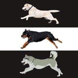 Hundevektorillustration Lizenzfreie Stockfotos