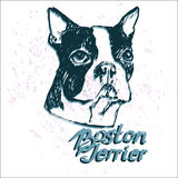 Hundevektorillustration Bostons Terrier Lizenzfreies Stockbild
