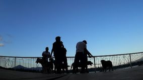 Hundewanderertreffen am See-Parkschattenbild stock footage