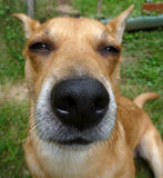 Hundewekzeugspritze Stockbilder
