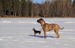 Hundewinter draußen schneien See stockfoto