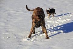 Hundewinter draußen schneien See stockfotografie