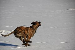 Hundewinter draußen schneien See lizenzfreies stockbild