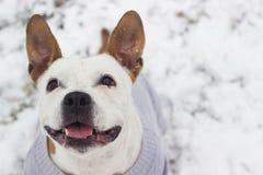 Hundewinter-Freudenporträt lizenzfreies stockbild