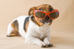 hundexponeringsglas Arkivbilder