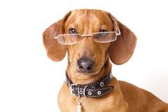 hundexponeringsglas Arkivfoto