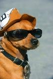 hundexponeringsglas Royaltyfri Bild