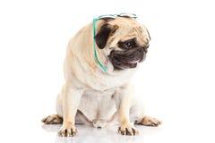 Hundexponeringsglas på vit bakgrund Fotografering för Bildbyråer