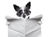 Hundezeitung Stockbild