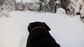 Hundezwinger in Holz im Winter mit einer Kamera auf einer R?ckseite stock video